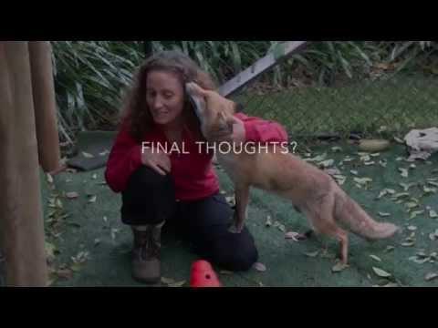 Arian Wallach  Save Sydney Fox Rescue
