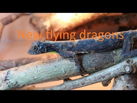 My new flying dragons