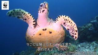 大洋や、世界各地の沿岸域では、自然環境の開発や、汚染、資源の乱獲に...