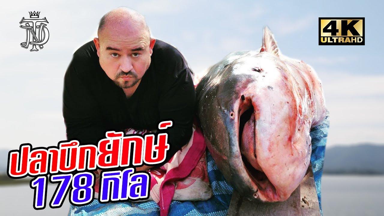 ปลาบึกยักษ์ 178 กิโล | Mekong Giant Catfish 178 KG.