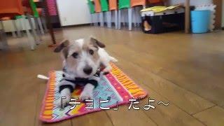 ニセコ道の駅すぐとなり ごはん&カフェ DOG TAIL ドッグテイル.