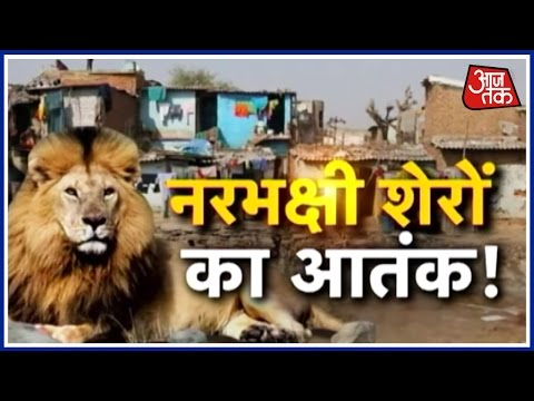 Fifth Attack On Humans By Lions In Gir forests