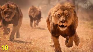 Download Top 10 Unbelievable Animals That Saved People's Lives Mp3 and Videos