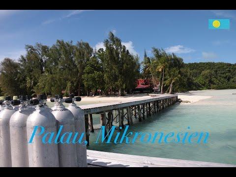 Mantarochen in greifbarer Nähe. Palau, Mikronesien