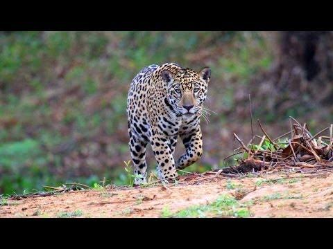 The Pantanal HD