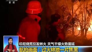 [共同关注]印尼烧荒引发林火 天气干燥火势蔓延| CCTV