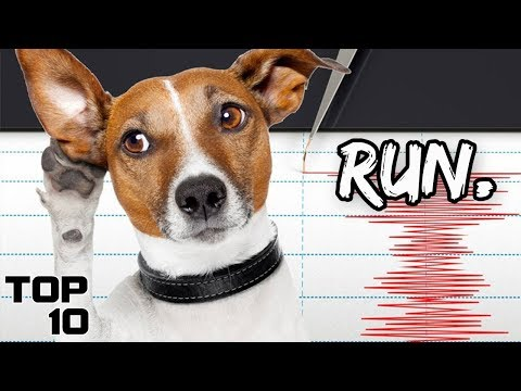 Top 10 Scary Times Animals Predicted Disasters
