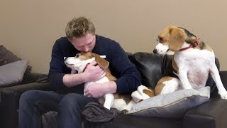 Funny  Dogs Reaction when I Give Attention  Only One of Them | Charlie the Dog
