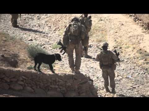 U.S Marines 1/5 (OEF) Compilation