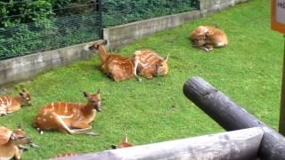 Зоопарк Праги какие животные есть, Чехия ZOO Prague Czech Republic