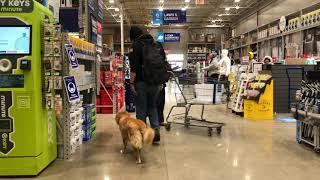 Best Dog Training Toledo, Ohio! 7 Month Old Nova Scotia Duck Tolling Retriever, Nova!