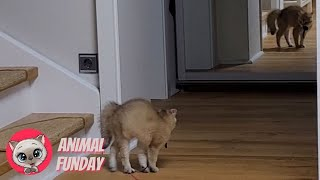 Has Seen Siggy A Ghost? #3  Funny Kittens 2021  Animal Funday