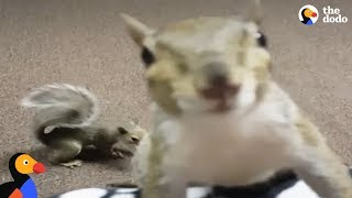 Rescue Squirrels Have THE Most Patient Mom | The Dodo
