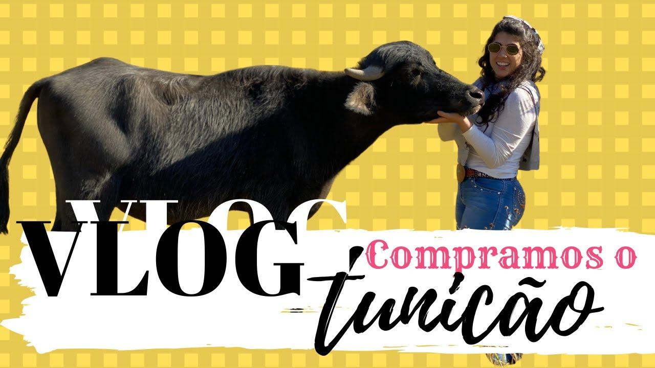 Final de semana em Joanópolis - Compramos mais um búfalo | Canal Jeito de Cowboy