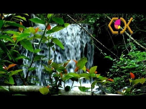 (3D SBS) GIBA GORGE FOREST WATERFALL - COTR MEDITATION 01 – LONG CUTS - DIARY 25_10_2012