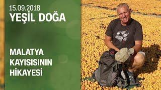 Malatya kayısısının hikayesi - Yeşil Doğa 15.09.2018 Cumartesi