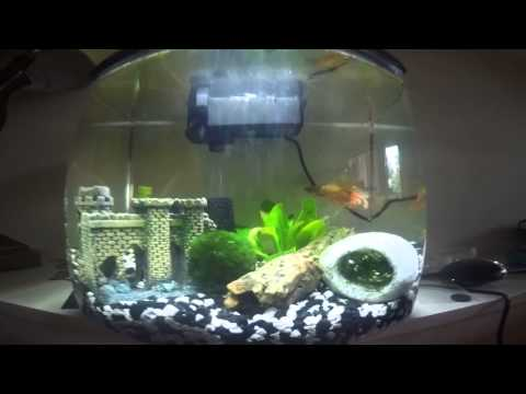 Orange crowntail male betta fish unboxing and tank set up for Used fish tanks for sale many sizes