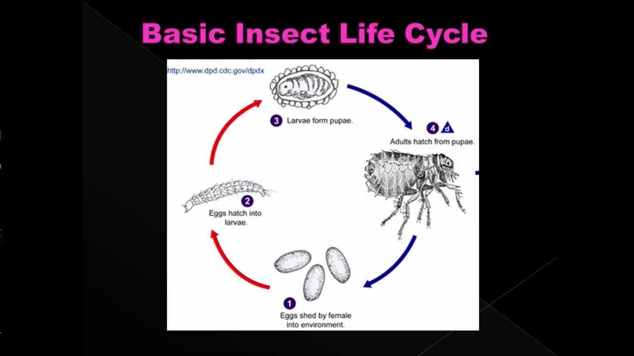 Estimating Post Mortem Interval Part 5 Forensic Entomology Youtube