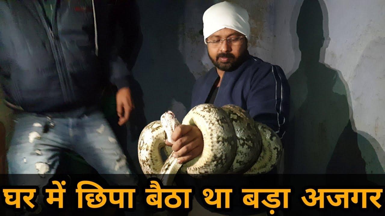 घर मे छीपा बैठा था बड़ा अजगर -bapi da snake expert