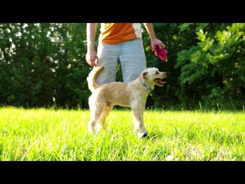 DOG tricks - TRAILER