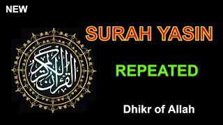 Surah Yasin    ( repeated) Beautiful