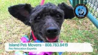 Hawaii Pet Quarantine Info From Island Pet Movers