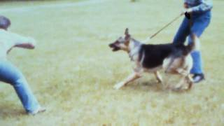 Guard Dog Training 1973 Silent