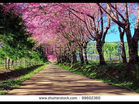 ภาพวิวสวยๆในประเทศไทย 1