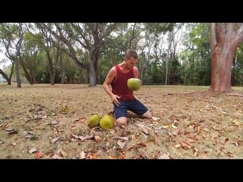 Florida Keys fruit hunting - part 1 Key Largo canistel and coconuts