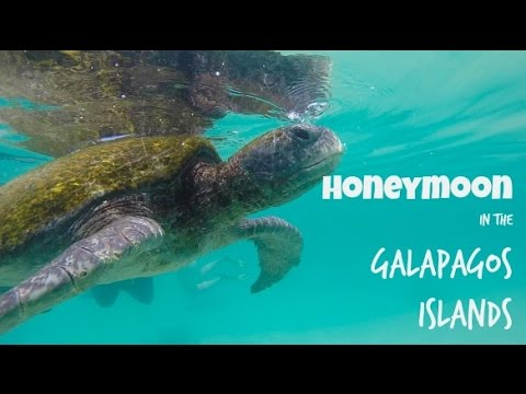 Honeymoon adventure in the Galapagos Islands!