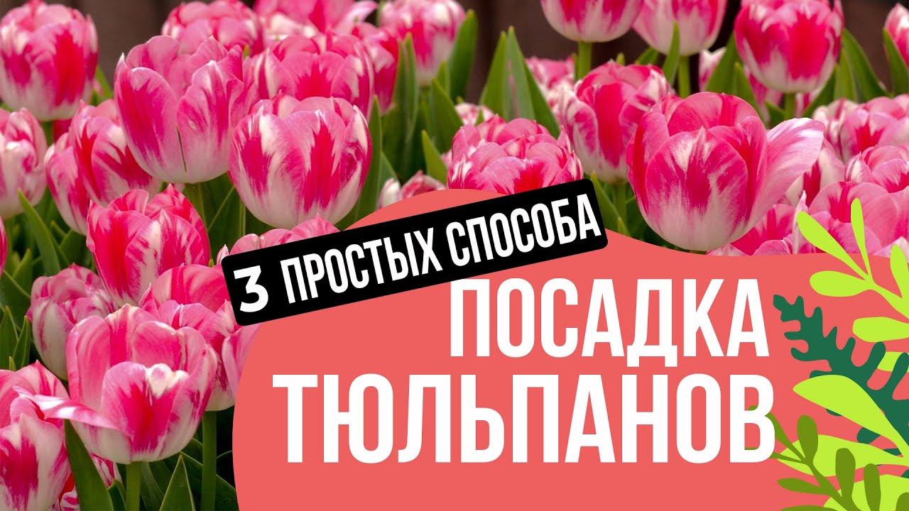 3 ЛУЧШИХ СПОСОБА ПОСАДКИ ТЮЛЬПАНОВ И ЛУКОВИЧНЫХ!