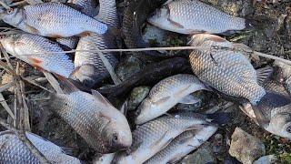 РЫБАЛКА НА ПОПЛАВОК, ЖОР КАРАСЯ И 15 САЗАНОВ НА УДОЧКУ   рыболовный дзен и ничего лишнего
