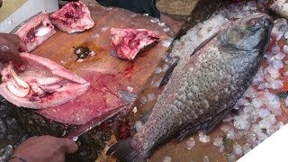 Big Catla catla Fish Cutting | Fastest Big Fish Cutting | Indian Big Carp Fish Cutting