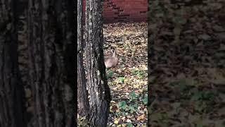 Заяц у МИЭТа