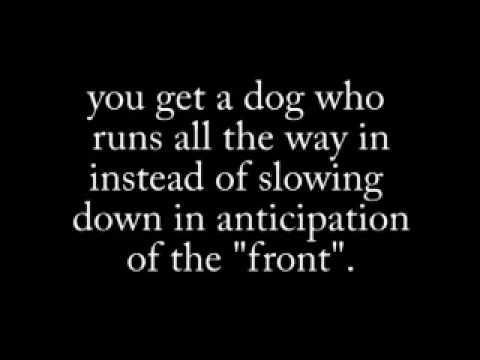 dogs---fast-recall-game