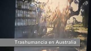 Apicultura en Australia - Trabajo de trashumancia - Beekeeping Australia(Nota sobre trashumancia y un dia de trabajo en la apicultura de australia. ملاحظة على الانتجاع ويوم من العمل في تربية النحل أستراليا. 注意對遷徙..., 2011-05-11T18:11:07.000Z)