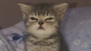 Angry - Funny Cats & Dogs That Will Fill You With Happiness🥰