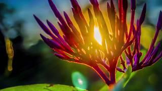 Música Relaxante com lindas imagens da natureza.