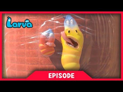 LARVA - WRAP | Cartoon Movie | Cartoons For Children | Larva Cartoon | LARVA Official