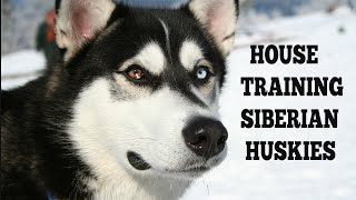 How To Quickly Potty Train Siberian Huskies