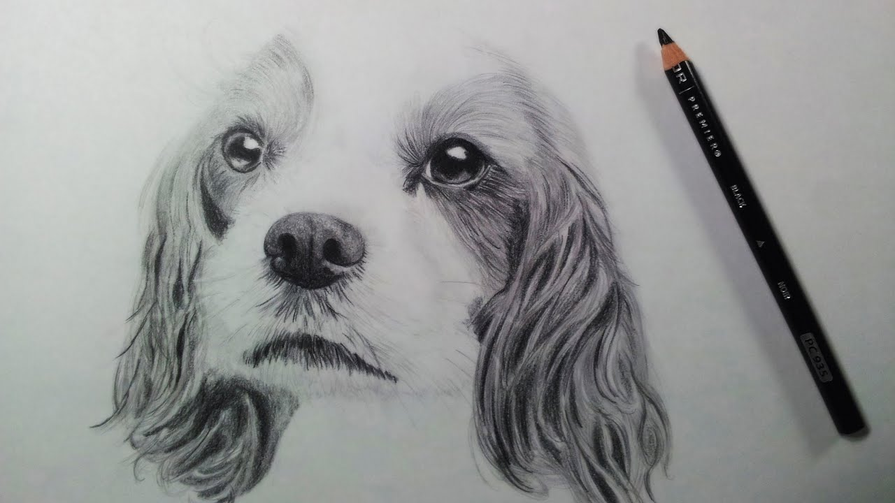 drawing a dog puppy time lapse youtube