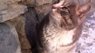 Бывшие хозяева вышвырнули кота умирать на улицу