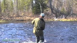 Рыбалка на Кольском  . Как ловить семгу ?