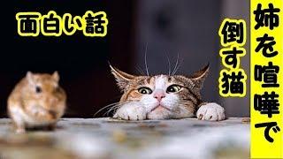 招き猫ちゃんねる・ 登録はこちら! https://www.youtube.com/channel/U...