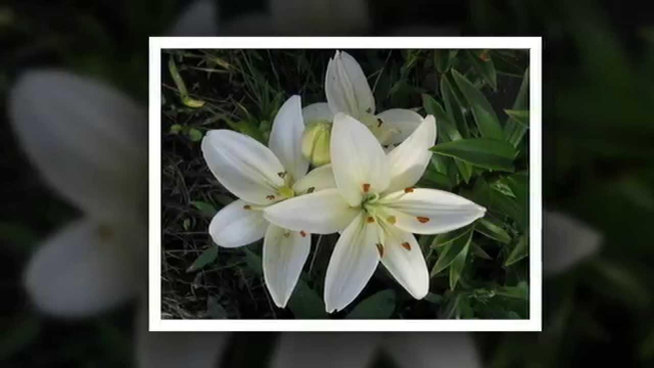 Купить самые красивые цветы в мире видео бутоньерка доставкой