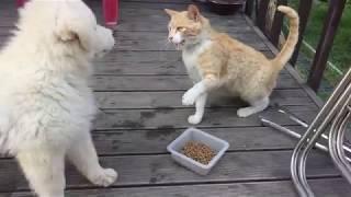 강아지와 고양이의 밥그릇 싸움^^