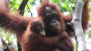 Monti And Anggun In Bukit Baka Bukit Raya National Park In West Kalimantan