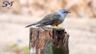 Birds lover beautiful