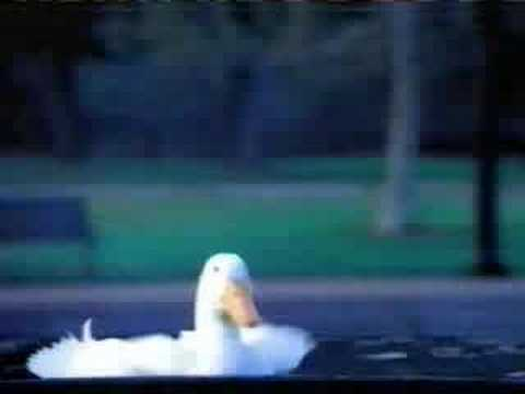 aflac duck commercial