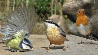 Bird Videos for Cats to Watch : Little Birds Filmed in Slow Motion
